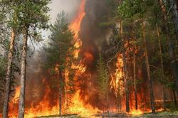Forest fires raging in Russia