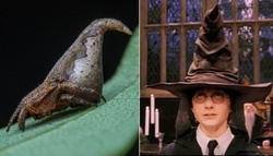 "Scientists have named a new species of spiders in honor of the ""Hats"" from the ""Harry Potter"""