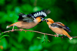 Birds revealed the secret of human love