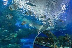 Foreign students comprehend the mysteries of science at the seaside aquarium