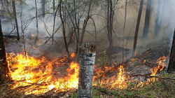 In the Irkutsk region burn 10 thousand square meters of forest