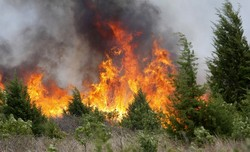 The area of forest fires in the Irkutsk region has reached a thousand hectares