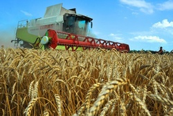Siberian farmers harvested record crops of grain
