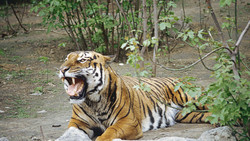 In China, during a visit to the Park, a woman was killed the tiger