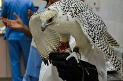 In the UAE, opened a hospital for the birds