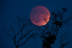 "The inhabitants of the Land saw the ""blood moon"""