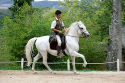 The debtor rode away from the bailiffs on a white horse