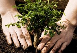 "In Irkutsk has passed the action ""Plant a tree"""