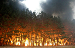 12 fires burning in the forests of the Far East