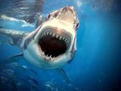 In Australia a woman diver was attacked by a shark