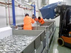 In the Murmansk region opened a fish processing factory