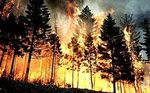 The area of forest fires in Siberia for days has increased 4 times