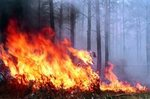 In the Irkutsk region burned thousands of hectares of taiga