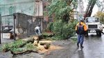 In the Rostov region eliminate consequences of a powerful hurricane