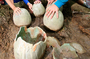 In China discovered dozens of dinosaur eggs