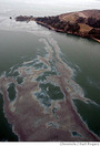 Use of Chemicals in U.S. oil spill endangering wildlife