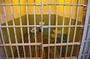 In Ufa sentenced breeder Caucasian shepherd